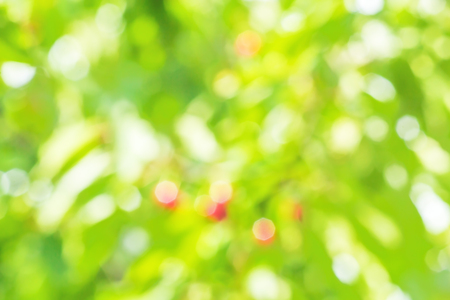 glare: Blurring background of garden with sun glare on the leaves and berries on a sunny summer day Stock Photo