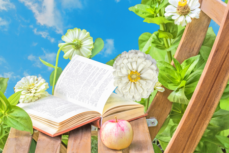 day flowering: Apple and open book on wooden garden chair among the flowering white zinnias in the garden on a summer day against the blue sky, close-up. Selective focus Stock Photo