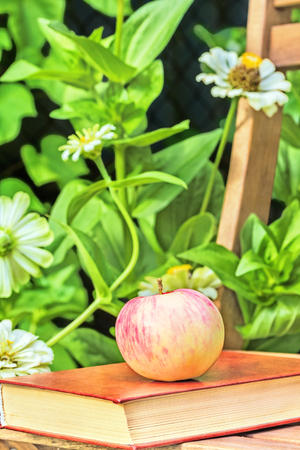 day flowering: Apple and book on a wooden garden chair among the flowering white zinnias in the garden on a summer day, close-up. Selective focus