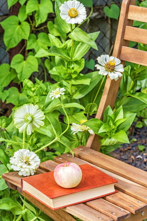 day flowering: Apple and book on a garden chair among the flowering white zinnias in the garden on a summer day, close-up. Selective focus