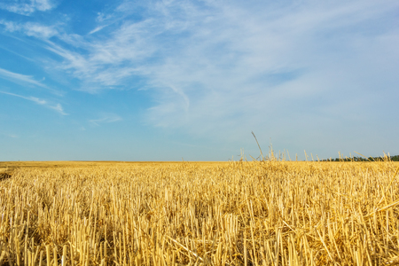 Autumn stubble field after wheat harvesting on the background of blue sky with clouds, close up