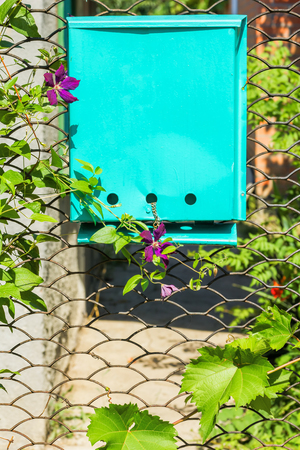 Lattice garden gate with a mailbox, twined with grapes and clematis, on a sunny summer day