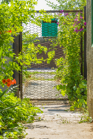 Lattice garden gate with a mailbox, twined with grapes and clematis, on a sunny summer day, in backlight Stock Photo