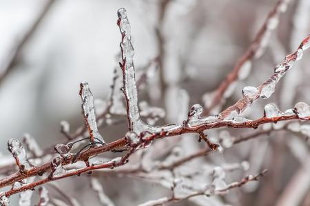 겨울 정원, 사과 나무에서 분기의 이상 얼음 스톡 콘텐츠