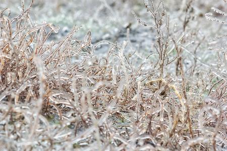흐린 겨울 날에 아이스 잔디 매크로. 선택적 초점 스톡 콘텐츠