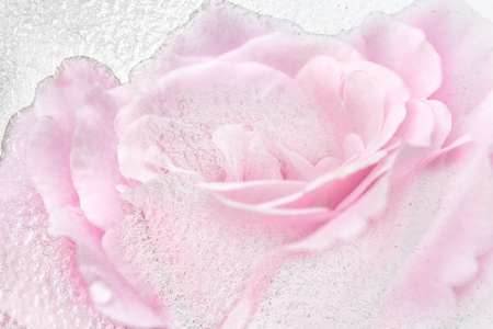 Double exposition of pink rose and white ice, macro. Selective focus 스톡 콘텐츠