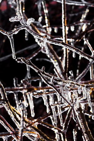 Icicles on the branches of the wild grapes after freezing rain on a winter day, backlight