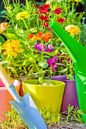 Seedlings of flowering zinnia in multi-colored flower pots, scoop and watering can in the garden on a sunny spring day Banco de Imagens