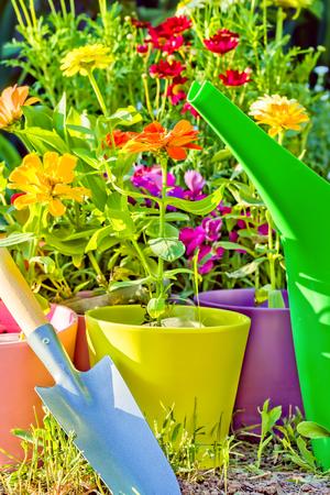 Setzlinge von blühenden Zinnien in bunten Blumentöpfen, Schaufel und Gießkanne im Garten an einem sonnigen Frühlingstag