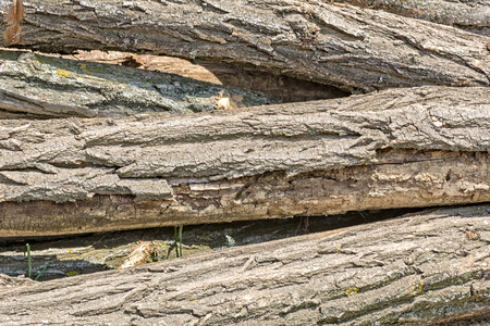 Texture of the trunks of sawed trees, macro Reklamní fotografie