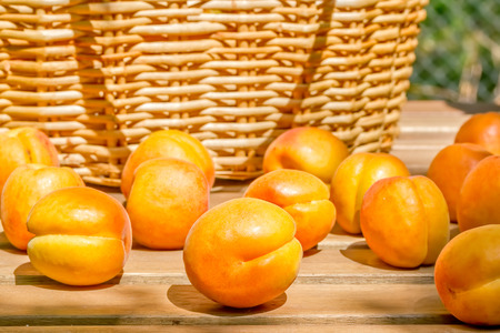 Orange ripe apricots on a wooden table in the garden on a sunny summer day on blurred background of a wicker basket, close up