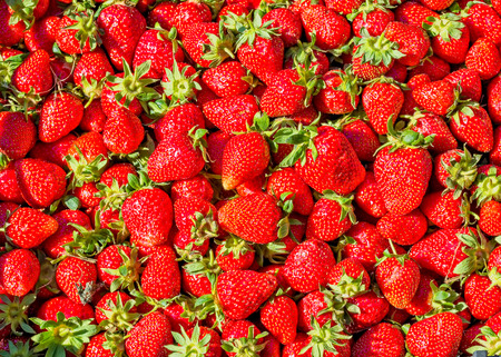 Strawberry. Crop of ripe red organic berries, close-up. Fruit background and texture