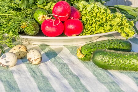 Still life with fresh summer vegetables, close-up. Green lettuce, dill, cucumbers, red radish and quail eggs on a striped linen napkin