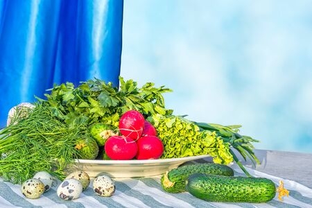 Still life with fresh summer vegetables near the window. Green lettuce, dill, cucumbers, red radish and quail eggs on a striped linen napkin