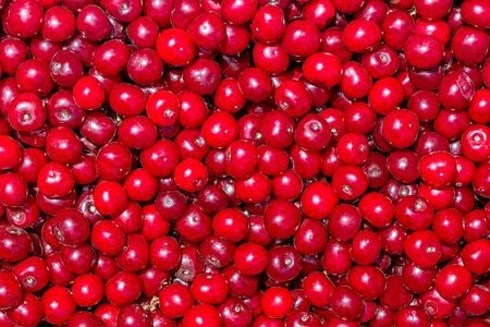 Cherry. Crop of ripe red organic berries. Fruit background and texture Reklamní fotografie