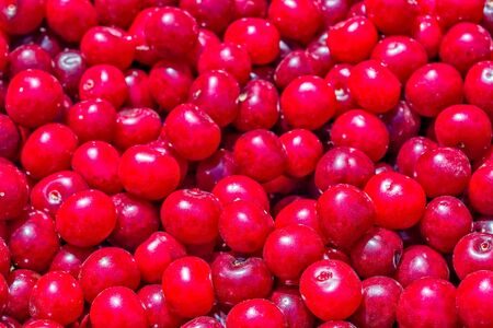 Cherry. Crop of ripe red organic berries, close-up. Fruit background and texture