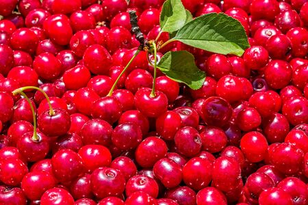 Cherry. Crop of ripe red organic berries. Berry background and texture Reklamní fotografie