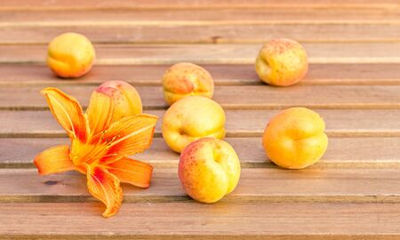 Ripe yellow orange apricots and daylily flower on a wooden table in the garden
