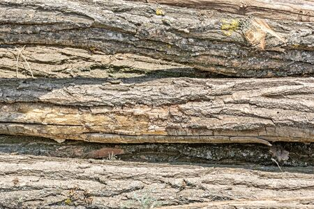 Texture of the trunks of sawed trees, close-up
