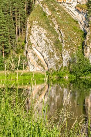 Picturesque rock and pine forest are reflected in the river on a quiet sunny summer evening, close-up. Focus in the foreground