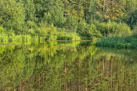 Landscape with forest reflection in a quiet backwater on a sunny summer evening