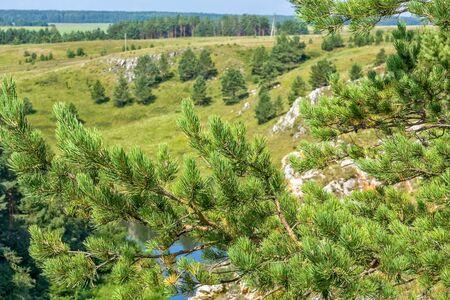 Pine branch on the background of a picturesque landscape with a river, rocks and field, close-up