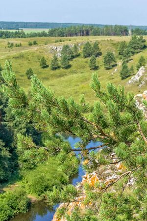 Pine branch on the background of a picturesque landscape with a river, rocks and field, macro