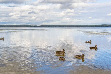 Scenic landscape with ducks on the lake and reflection of the blue sky in the water on a summer day
