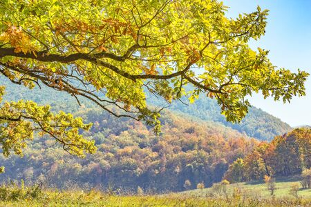 Oak branch with autumn leaves on a background of mountains and blue sky 写真素材