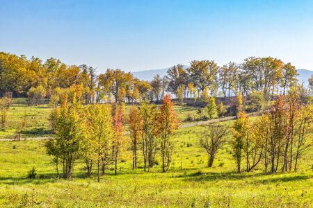 Trees with autumn foliage in a mountain valley against a blue sky