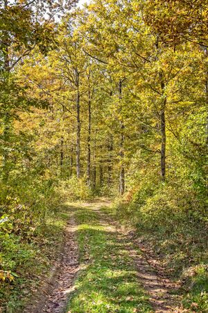Picturesque path and leaf fall in the oak autumn forest 写真素材
