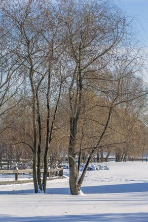 Picturesque landscape with trees in a snow-covered winter park on a sunny day Banque d'images - 135495547