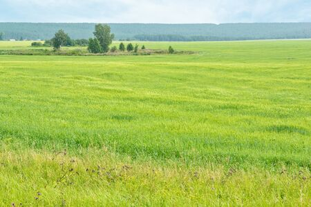 Picturesque rural landscape with green field and blue forest on the horizon Reklamní fotografie