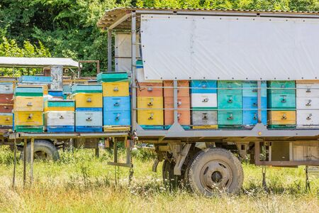 Mobile apiary in a meadow near the forest on a sunny summer day, close-up