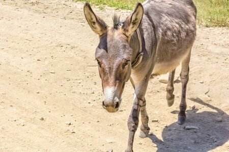 Cute donkey on a dusty rural road on a summer sunny day, close-up Reklamní fotografie