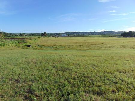 An open grass field in broad daylight Stock Photo