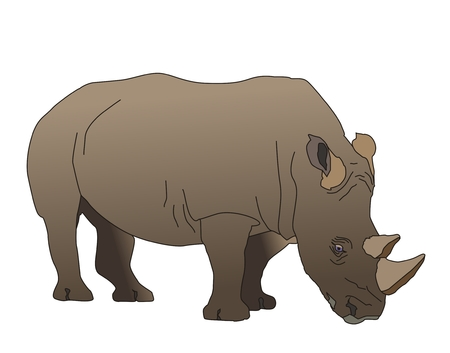 southwestern: The south-western adult black rhinoceros has two horns living in southwestern Africa