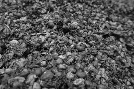 bw: Focus coffee seed. BW Stock Photo
