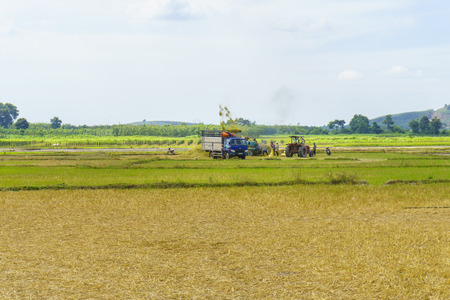 harvest: Farmer harvest