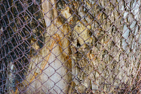 barbed wire frame: Mesh fence on the background of wood tree