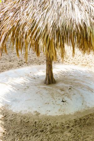 thatch: Thatch straw umbrella