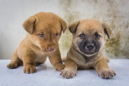 black bitch: Twin puppies loving Stock Photo