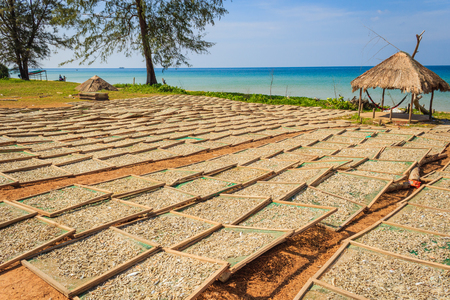 drying: Drying fishes under sunlight