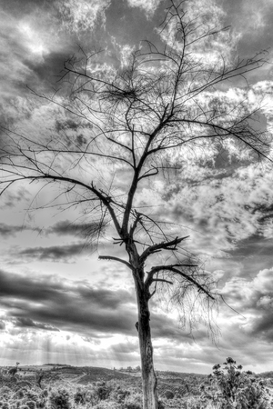 trees photography: Dry branch of tree over the sky. Black and white