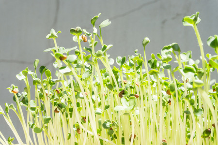 Growing sprouts Stock Photo