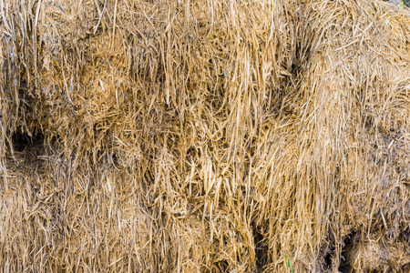 haycock: Dry straw Stock Photo