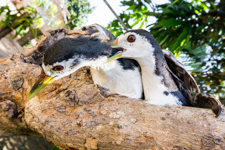 Couple birds Stock Photo
