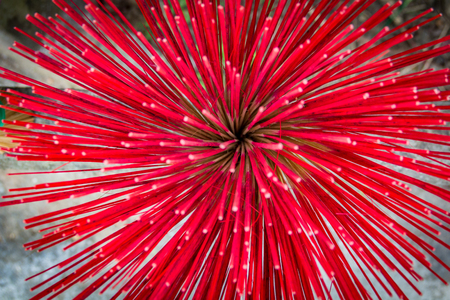 Red incense sticks Stock Photo