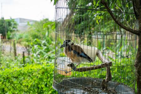 periquito: Bird in a birdcage