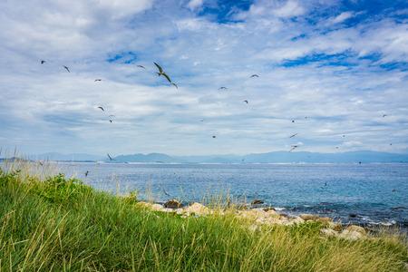 Birds flying in island Banco de Imagens